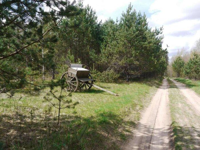 Чтобы попасть в деревню, необходимо преодолеть лесную дорогу / Фото: frosya-hod.livejournal.com