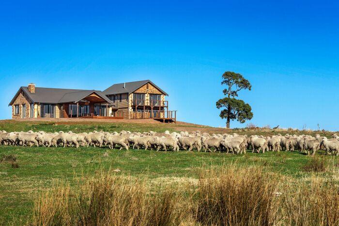 Некоторые находчивые австралийцы заводят овец, которые выедают траву даже качественнее, чем коровы / Фото: livelib.ru
