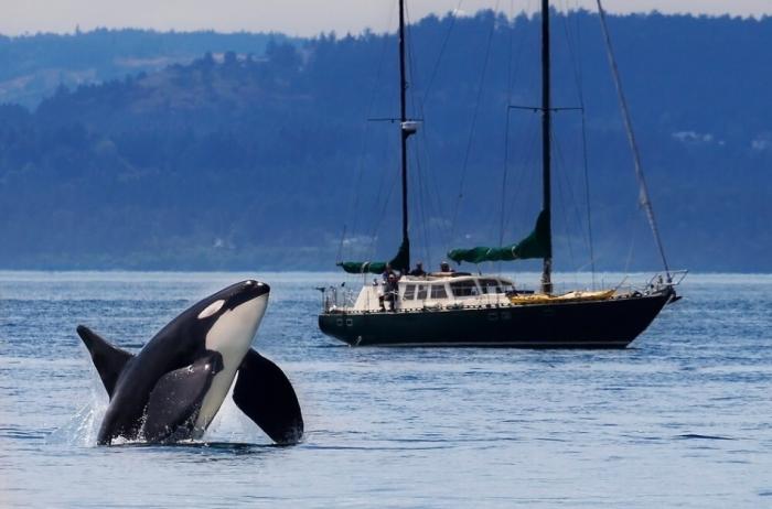 Этот хищник вообще с людьми в открытом морском пространстве пересекается слишком редко / Фото: news.myseldon.com