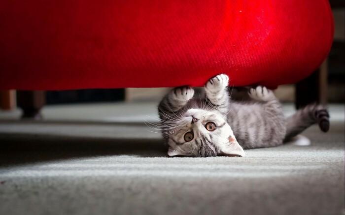 Отучить питомца от привычки точить когти об мебель можно несколькими способами / Фото: sunhome.ru