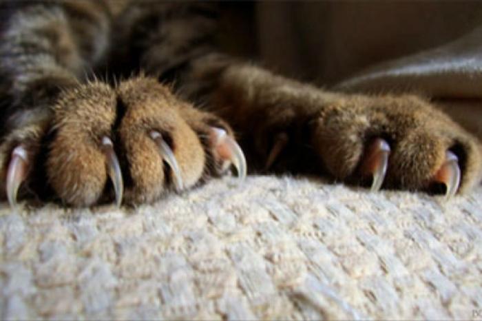 Существует несколько причин, по которым коты дерут мебель / Фото: bobox.ru