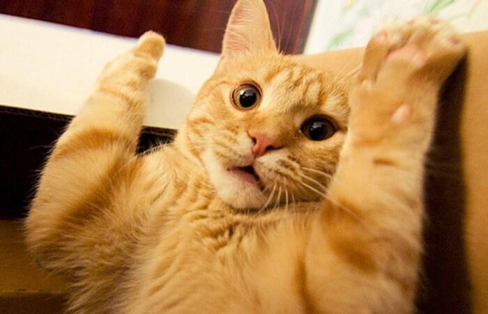 Громкие звуки пугают кошку, поэтому она побоится пакостить в следующий раз / Фото: funik.ru