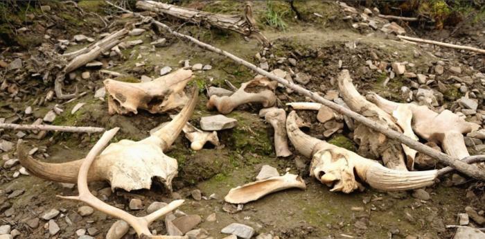Возле поселка Красный Яр есть мамонтовое кладбище / Фото: vk.com