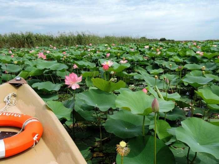 Чтобы поближе рассмотреть это чудо природы, можно арендовать лодку / Фото: turvopros.com