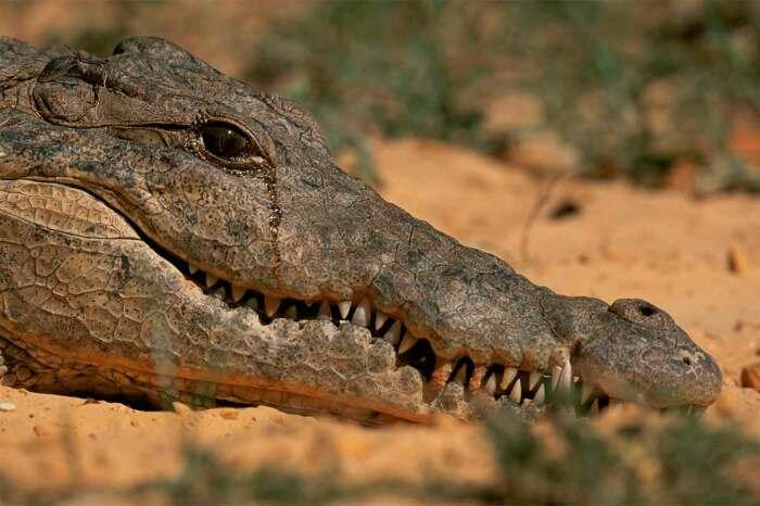 Конечно, у этих хищников вытекает из глаз жидкость, но к эмоциям это явление отношения не имеет / Фото: animaljournal.ru