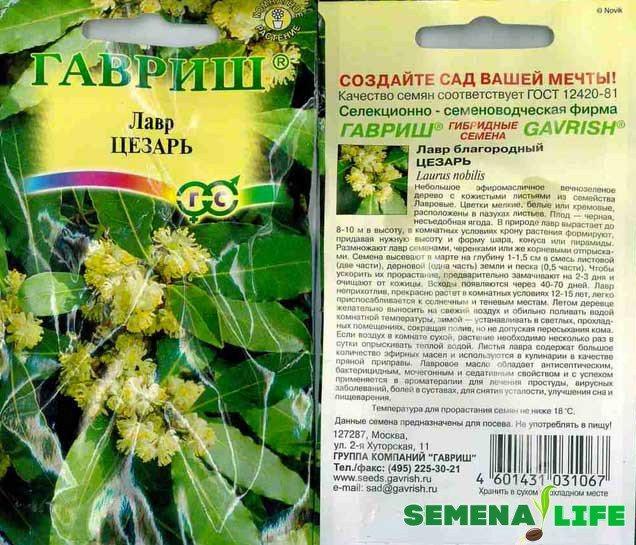 Получить лавровое дерево можно с помощью семян / Фото: agroevropa.ru