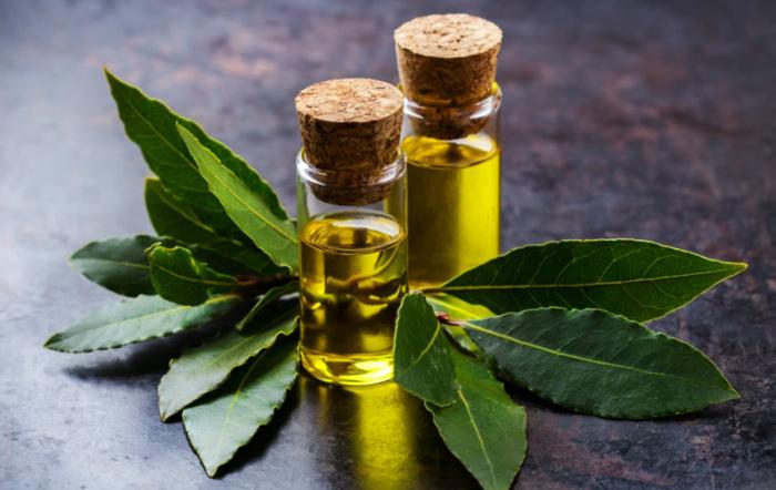 Масло из лаврушки хорошо устраняет воспалительные процессы / Фото: timeforgoodnews.gr