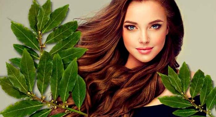 Лавровый лист - кладезь полезных веществ, укрепляющих волосы / Фото: YouTube
