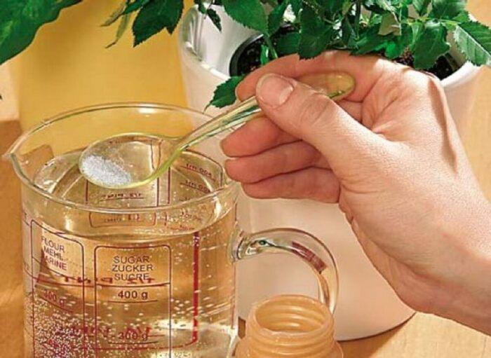 Доступное средство, которое нейтрализует белый налет и способствует активному росту комнатных растений