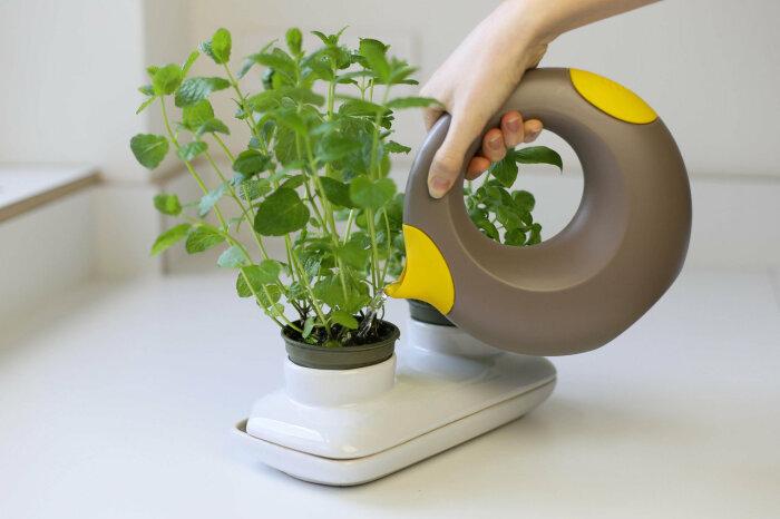 Что делать, если у комнатных растений зимой сохнут кончики листьев