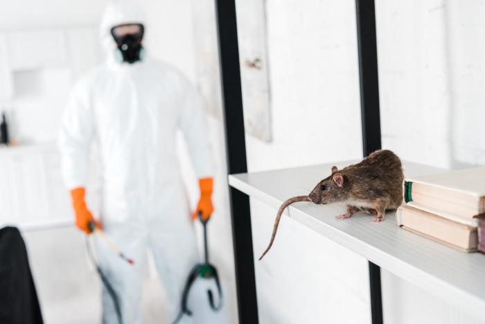 С крысами и сегодня продолжают воевать везде, вот только инструменты для борьбы с ними преимущественно иные – химические / Фото: oteplicah.com