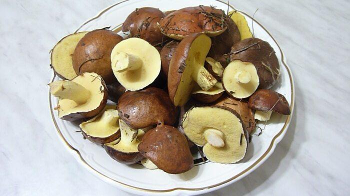 Есть люди, уверенные в том, что пленка гриба содержит в себе вещества, вызывающие слабительный эффект / Фото: edimkashu.ru