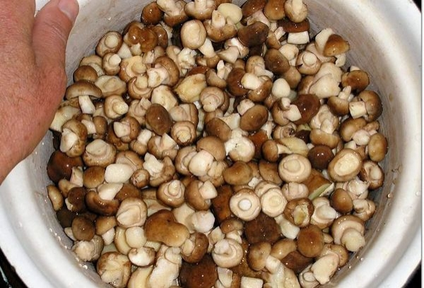 Некоторые считают, что у маленьких грибов не нужно убирать кожицу, а у больших необходимо / Фото: moya.pp.ua