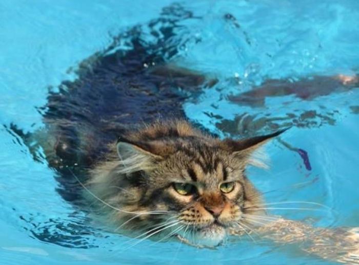 Водные процедуры – это одно из самых любимых занятий красавца-великана / Фото: fb.ru