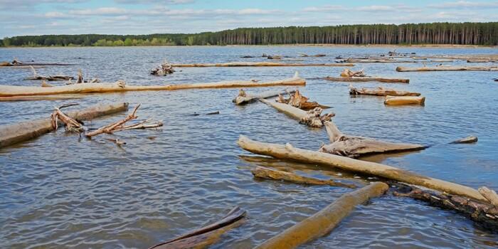 Чтобы достать с речного дна дорогущую древесину натурального морения, японцы предложили советскому правительству почистить за свой счет дно реки / Фото: fishingsib.ru