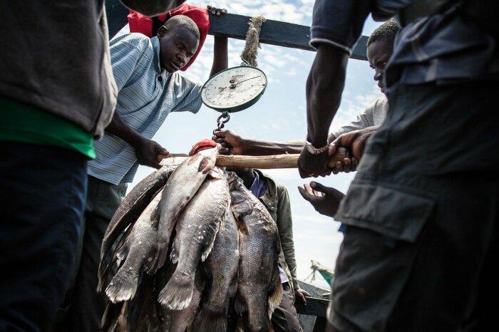 Местные рыбаки получают хорошие деньги / Фото: antipriunil.ru
