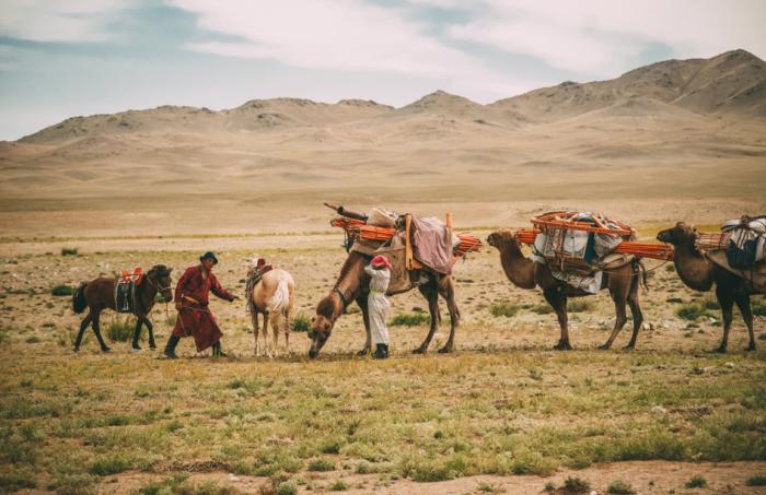 Для транспортировки всего необходимого в больших количествах монголы задействовали верблюдов, а в отдельных случаях использовалась лошадиная сила / Фото: nat-geo.ru