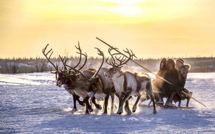 Ямальские ненцы - рослые непьющие люди, занимающиеся олениеводством / Фото: poembook.ru
