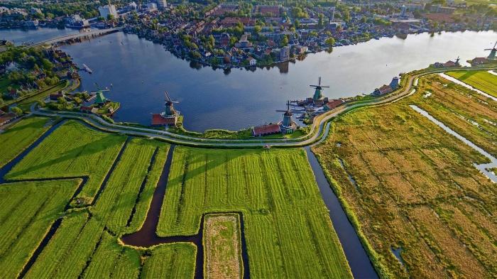 В Нидерландах хорошо развито сельское хозяйство / Фото: goodfon.ru