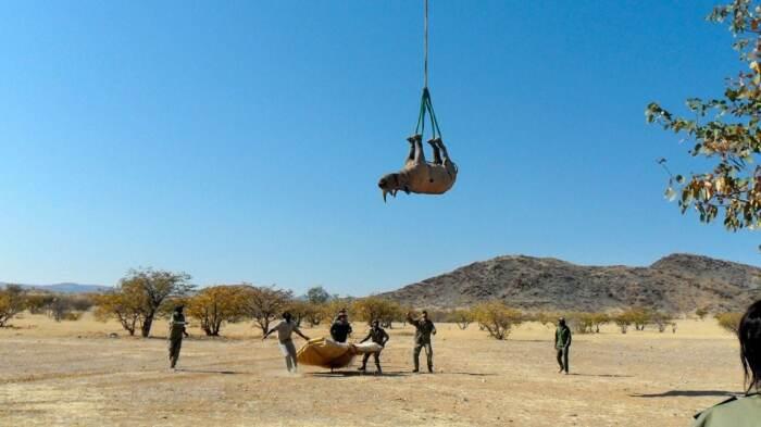 Подобный способ транспортировки является научным экспериментом, финансируемым Министерством окружающей среды Намибии / Фото: tuapsevesti.ru