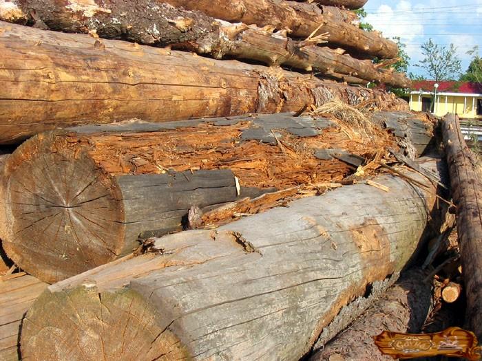 Без специальной обработки дерево гниет под воздействием внешних факторов / Фото: vsaunu777.ru