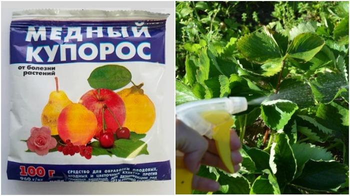 После инсектицидов необходимо провести обработку участка средствами от мучнистой росы, парши медным купоросом / Фото: sveklon.ru