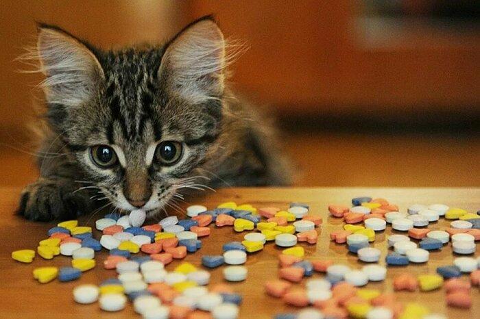 Периодически надо дополнительно давать кошкам витамины / Фото: yandex.ua