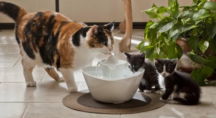 У животного всегда должен быть доступ к чистой и свежей питьевой воде / Фото: alreco.ru