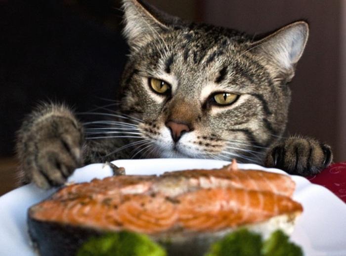 Большая часть обязательных для котов элементов содержится в натуральных продуктах / Фото: lapyhvost.umoritelno.com