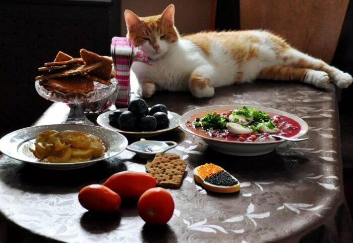 Кормить котов с общего стола не рекомендуется, это может негативно сказаться на их здоровье / Фото: s-zametki.ru