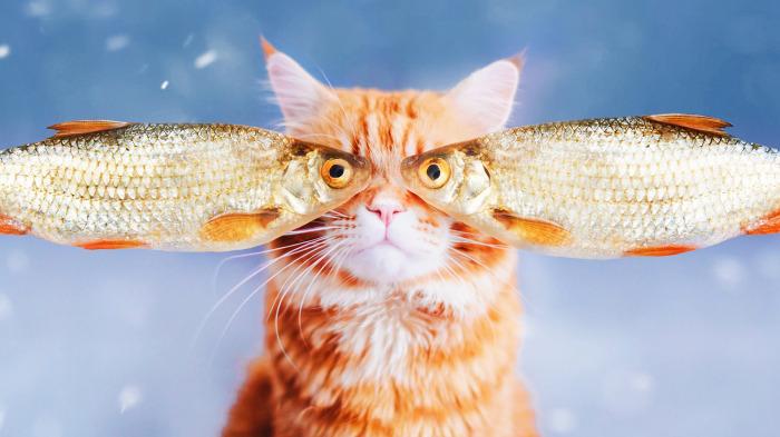 Кормить кота только рыбой или мясом неправильно, питание должно быть разнообразным / Фото: goodfon.ru