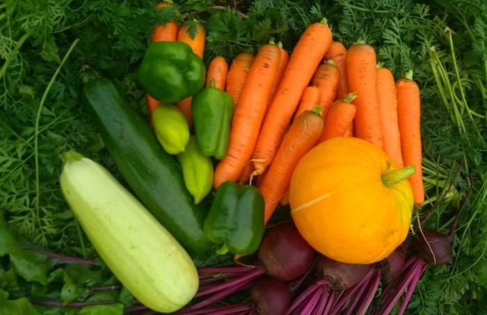 Вареные или сырые овощи важны для обеспечения полноценного питания котов / Фото: poleznii-site.ru