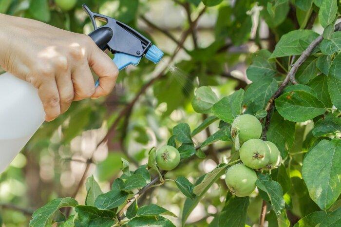 Идеальной подкормкой для яблони является внекорневая, улучшающая состояние листвы / Фото: mirtesen.ru