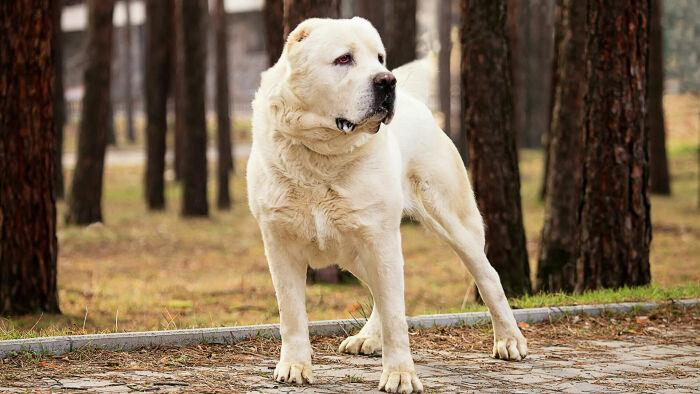 Крупный пес отличается хорошим аппетитом, поэтому выдает тоже внушительные порции «удобрений» / Фото: ria.ru