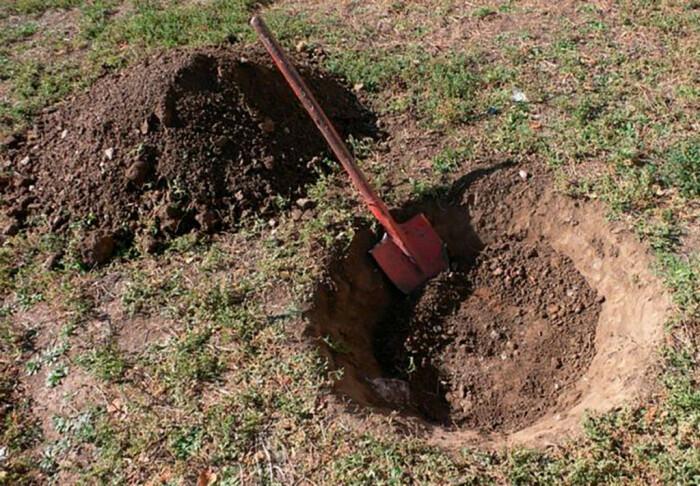 Для посадки саженцев ели глубина ямы должна быть не менее шестидесяти сантиметров / Фото: pocvetam.ru
