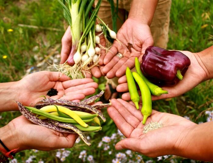 В намеченные лунки можно посеять семена редиса, моркови, лука, высадить рассаду / Фото: m.pg21.ru
