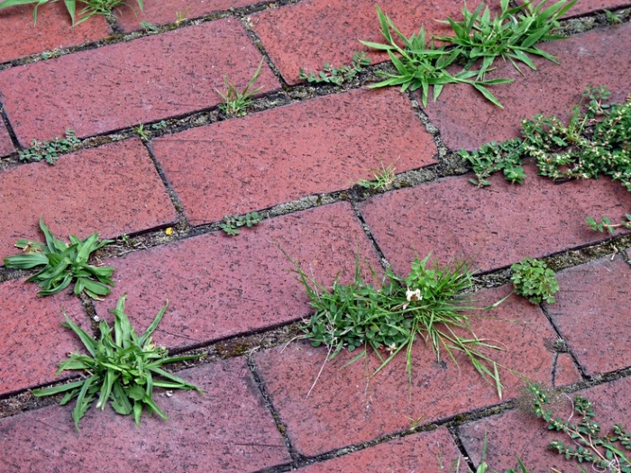 На посыпанных солью стыках тротуарной плитки трава перестанет расти / Фото: Pinterest