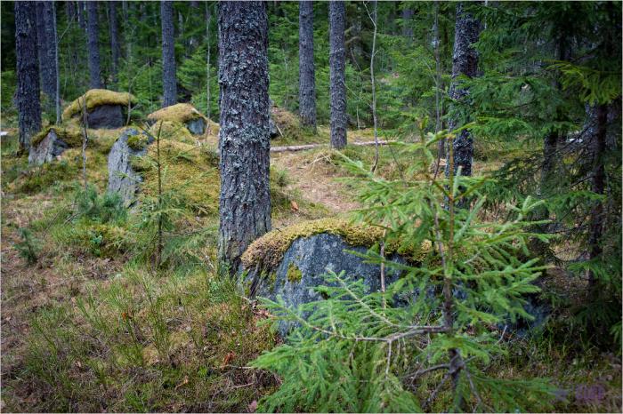 Такие сооружения называются противотанковые надолбы / Фото: onepamop.livejournal.com