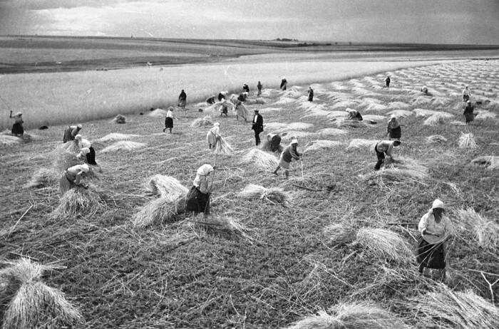 Во Вторую Мировую войну и после ее окончания поставки зерновых в страну осуществлялись по ленд-лизу / Фото: ru.rbth.com