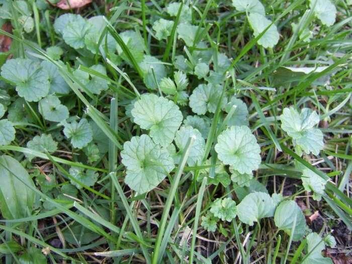Внимательно изучив растения, которые растут на вашем участке, можно многое узнать / Фото: zgnrus.ru
