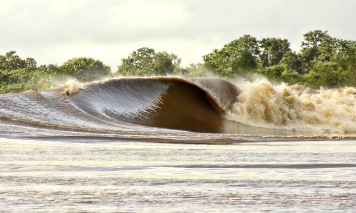 В Амазонку дважды в год приходит огромная волна, поднимающаяся на 800 километров вверх по течению / Фото: Twitter