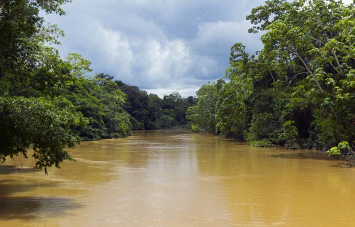 Берега реки заболоченные / Фото: travel-brazil-selection.com