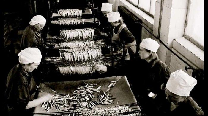 Заводы в СССР по переработке рыбы работали на полную мощность / Фото: www.youtube.com