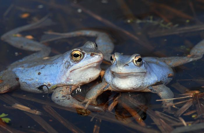 Кроме рыбы начали выращивать еще и лягушек, моллюсков и пресноводные виды креветок / Фото: photosight.ru