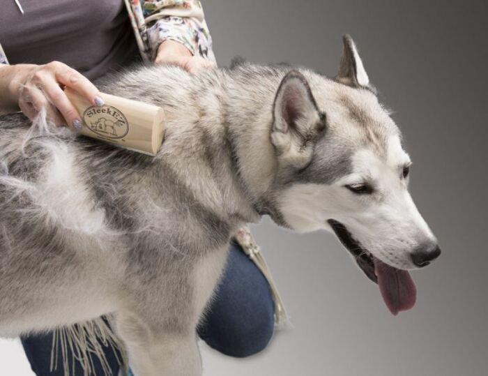 Собачья шерсть - подходящий материал для гнездования, поэтому рекомендуется ее не выбрасывать, а вывешивать на улице для братьев наших меньших / Фото: glorypets.ru