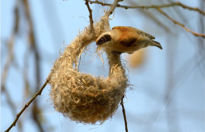 Многие факторы оказывают отрицательное влияние на численность птиц в больших городах / Фото: foto-tula.ru