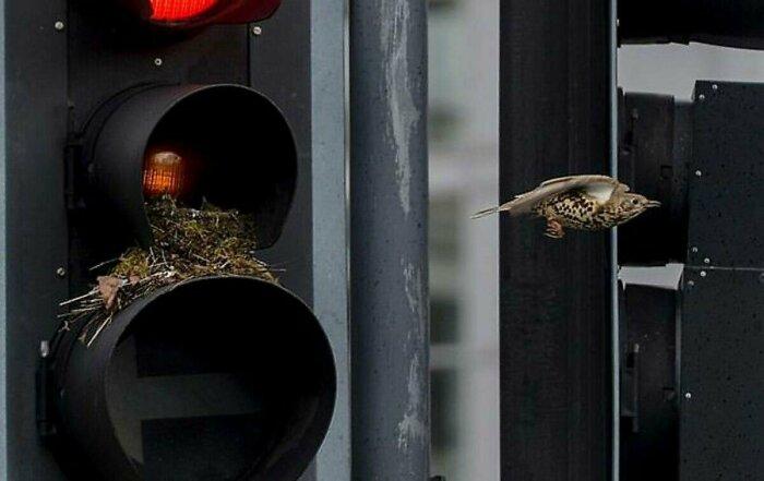 Технологии строительства зданий, домов изменились, и птицам просто негде вить гнезда / Фото: fishki.net