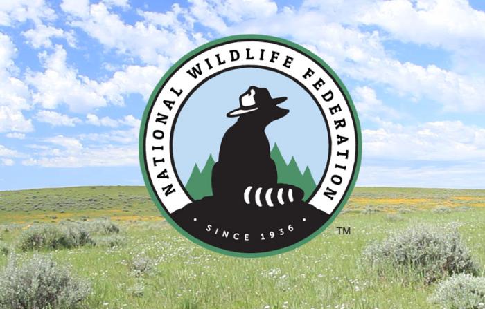 Организация по охране природы США NWF придумала достаточно эффективный способ оказания помощи пернатым / Фото: blog.nwf.org