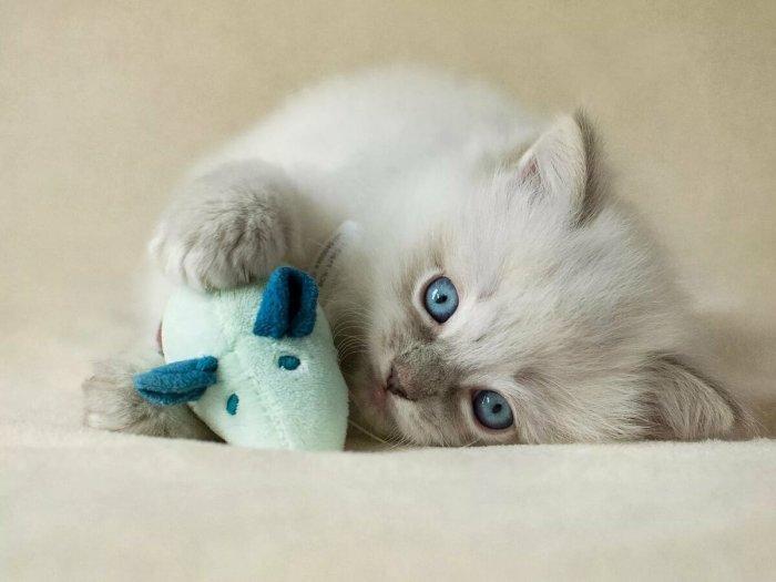 Коты вылизывают шерсть для устранения собственного запаха / Фото: 1zoom.me