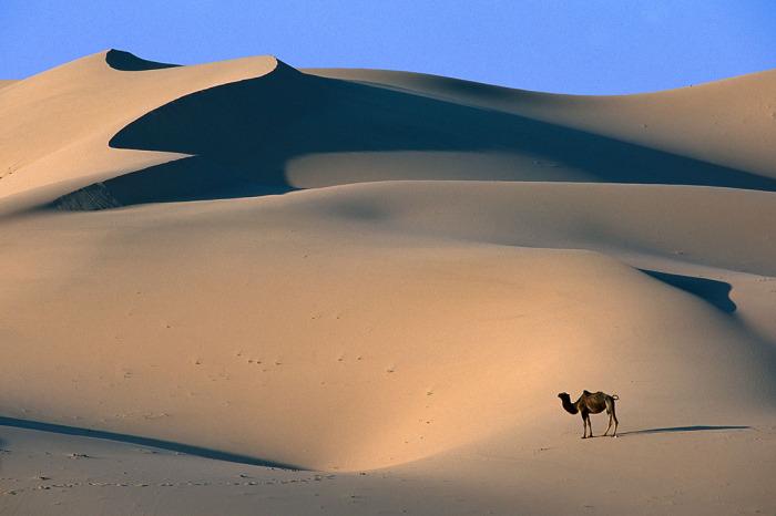 Условия существования в пустыне достаточно суровые, поэтому флора и фауны здесь очень бедные / Фото: takla-makan.com